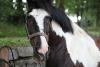 paarden-petra-016