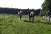 paarden-petra-069