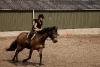 paarden-petra-107a